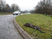 Otter road victim