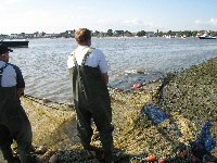 Mudeford netting