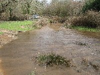 New Forest stream in flood