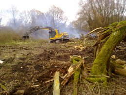 Clearing derelict woodland