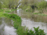 Flooded Trout Stream