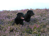 Bracken and Bramble