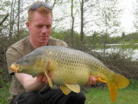 Yellow common