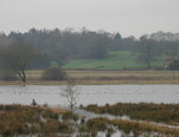 Wildfowl on the floods