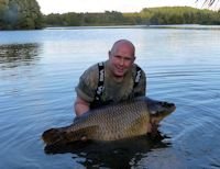 Huge common carp