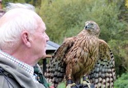 Ronnie and Goshawk