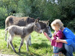 Meeting the donkeys