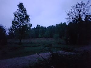 Dusk in teh New Forest