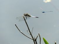 Scarce chaser and chaser
