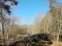 Woodland clearings