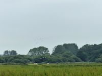 Lapwing and Godwit