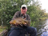 Large male tench