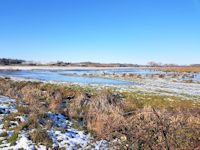 The frozen marsh