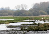North Marsh